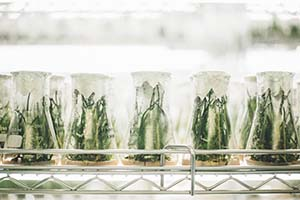 rows of test vials with plants